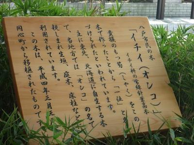 ichii2.jpg